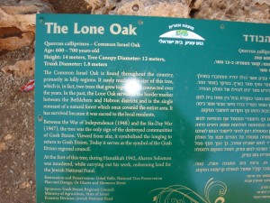 The Lone Oak Sign